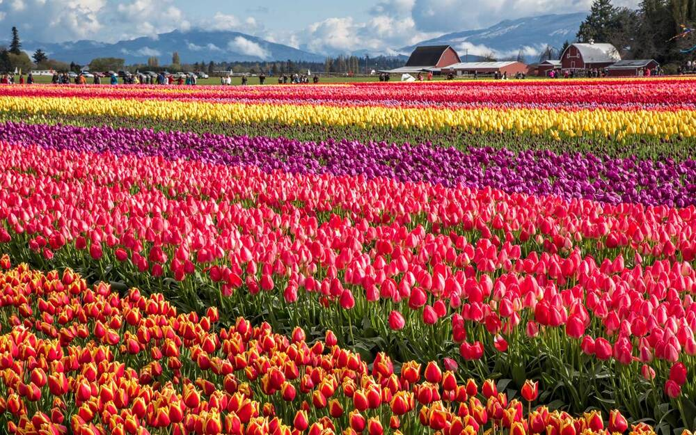 8 best spring and summer flower festivals in the u s travel leisure