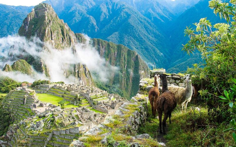 Llamas watch the morning mist rise over the ancient Inca fortress and sloping stone terraces of Machu Picchu
