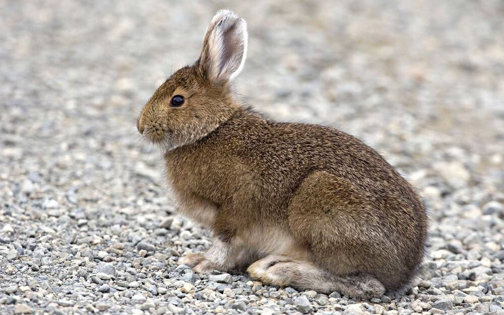 a baby rabbit caused an airport bomb scare and now its name is