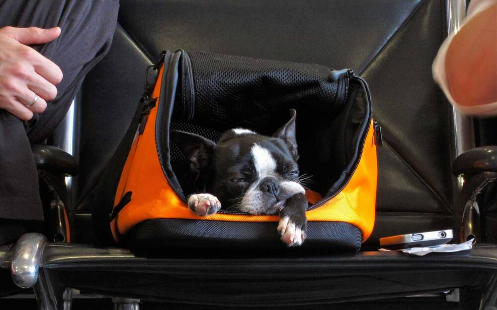 Southwest Airlines Just Overhauled Its Animal Policy Travel Leisure