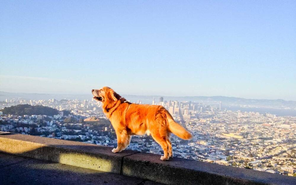 these are the 10 most dog friendly cities in the u s travel leisure