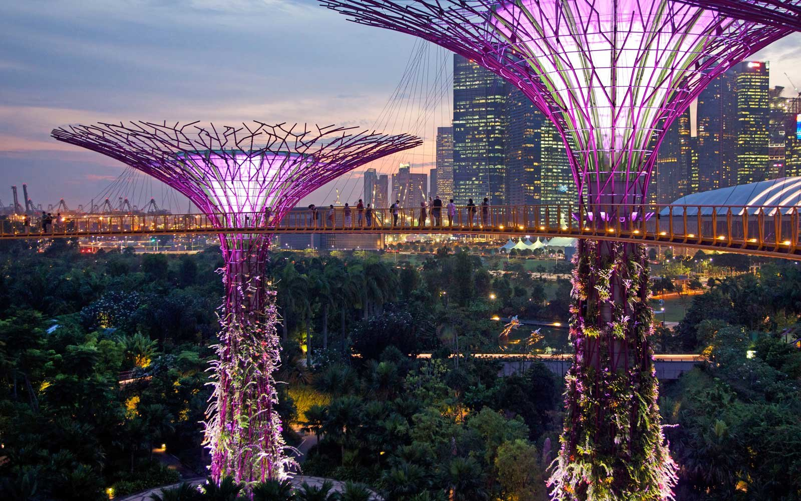 Singapore's Gardens by the Bay illuminated at night