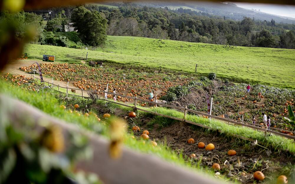 The Best Pumpkin Patch on Maui | Travel + Leisure
