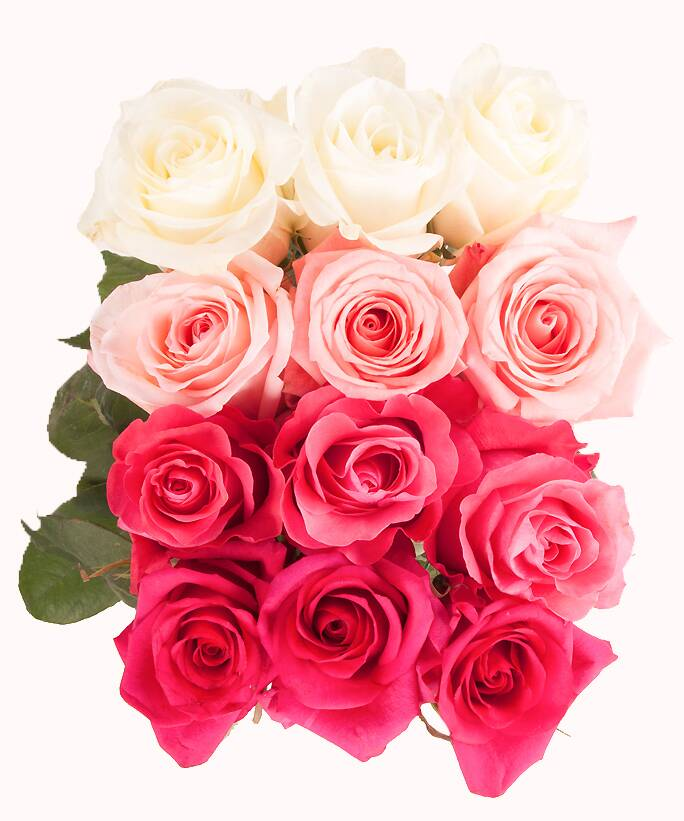 Rose color meanings what color rose to give everyone in your life favorite rose lead mightylinksfo