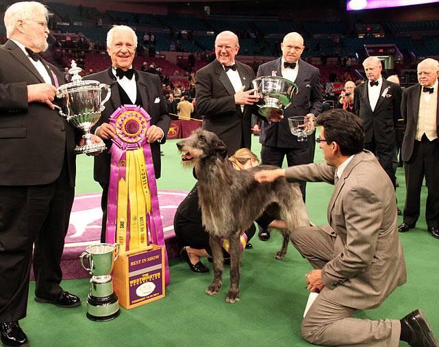 2011 Westminster Dog Show | SI com