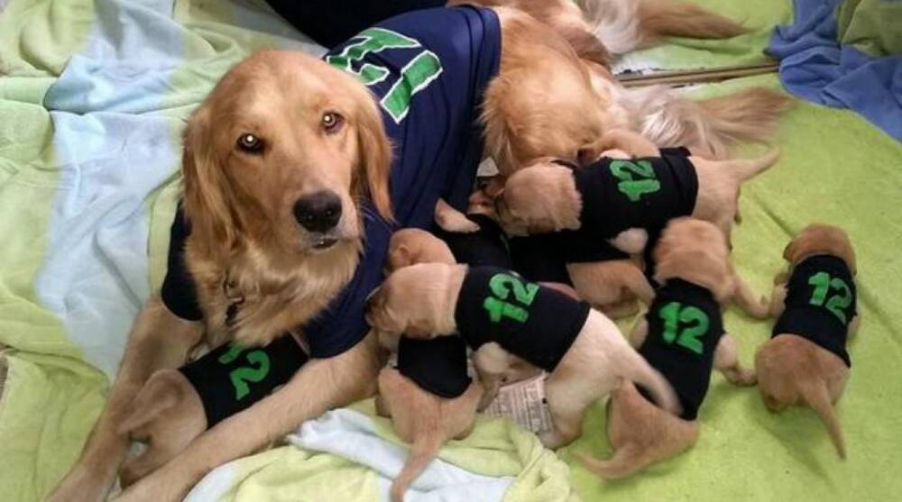 Seattle Seahawks fan shows 12th man spirit with dog and her 11 ... bbf85e7bf