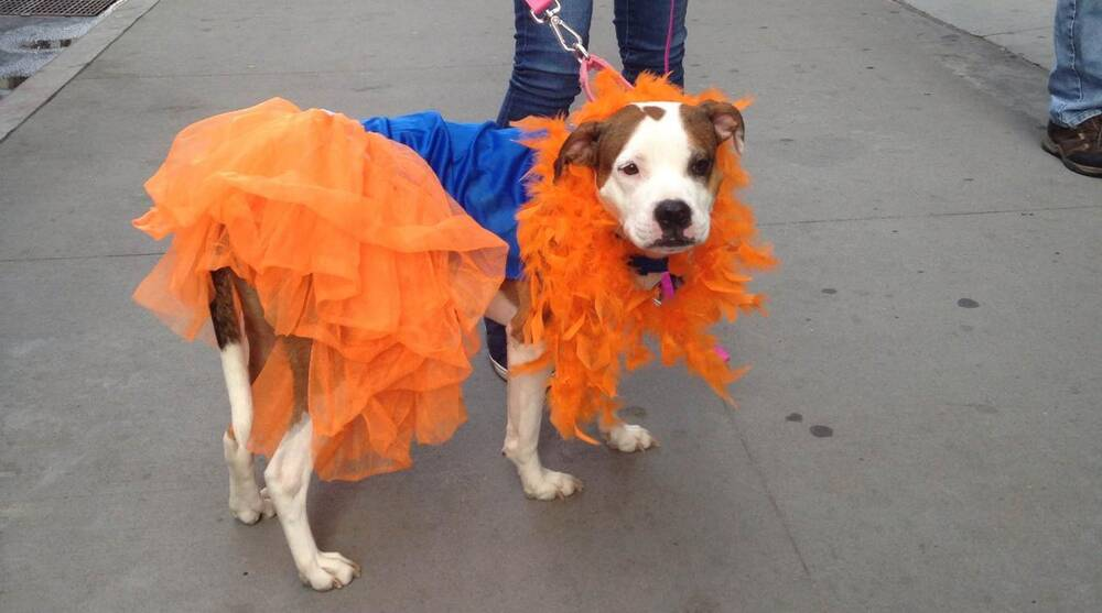 new style 40a0c de71d World Series: New York Mets puppy parade held in Manhattan ...