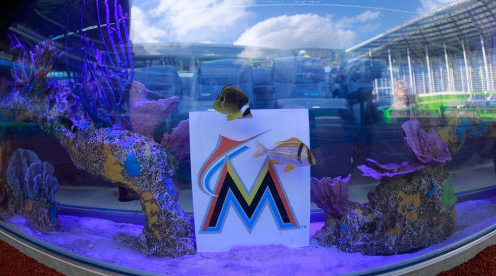 ef970720cae Fish swim in one of the aquarium tanks located behind home plate at Miami s  Marlins Park