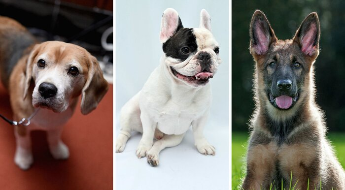 Here S The Dog Breed You Should Adopt Based On Your Zodiac Sign Hellogiggles