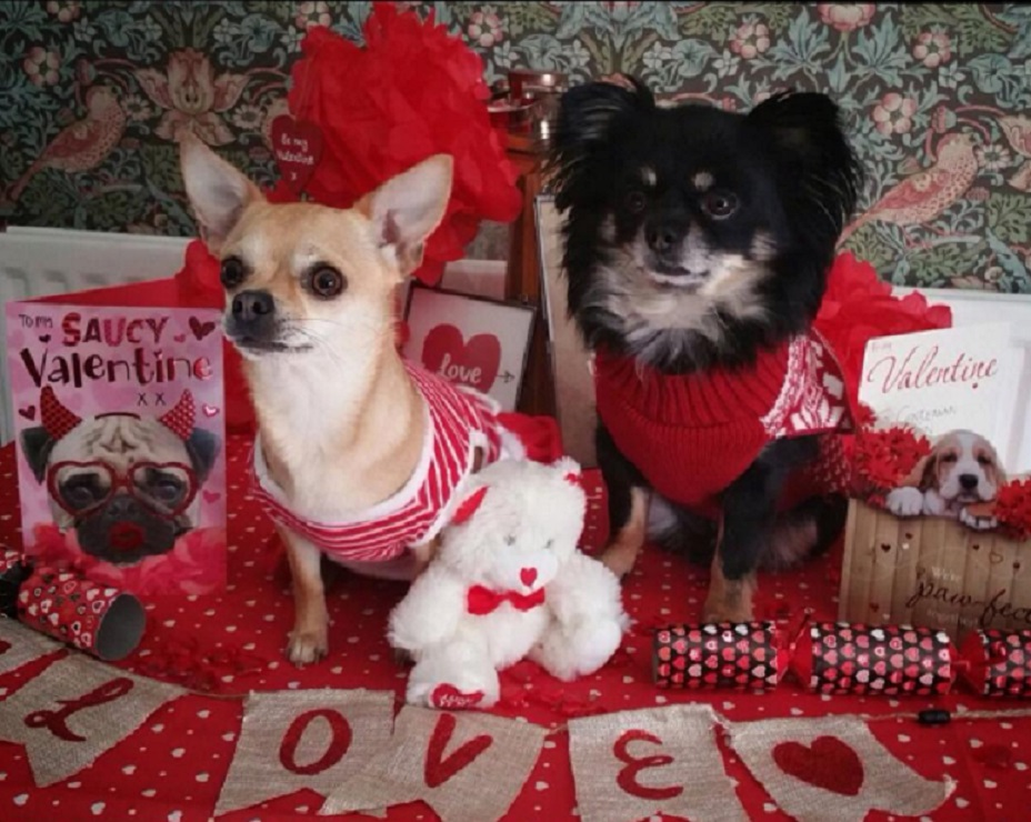 Image result for valentines day dogs