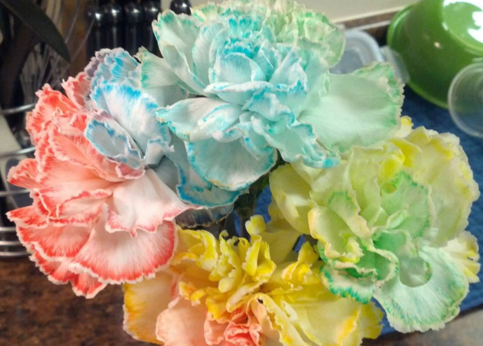 Here\'s how to use food coloring to change the color of flowers, in ...
