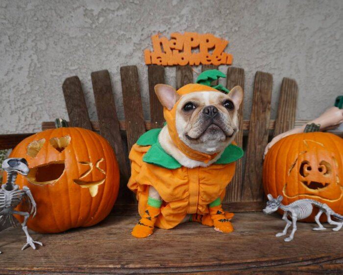 Dog Halloween costumes: 11 fun ideas for dressing up your pup ...