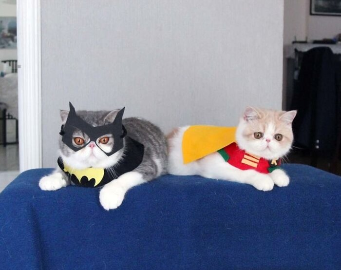 13 ridiculously cute cat Halloween costumes - HelloGiggles