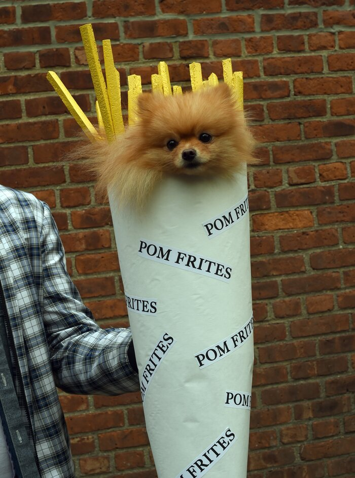 21 clever dog halloween costumes from nycs halloween dog parade hellogiggles