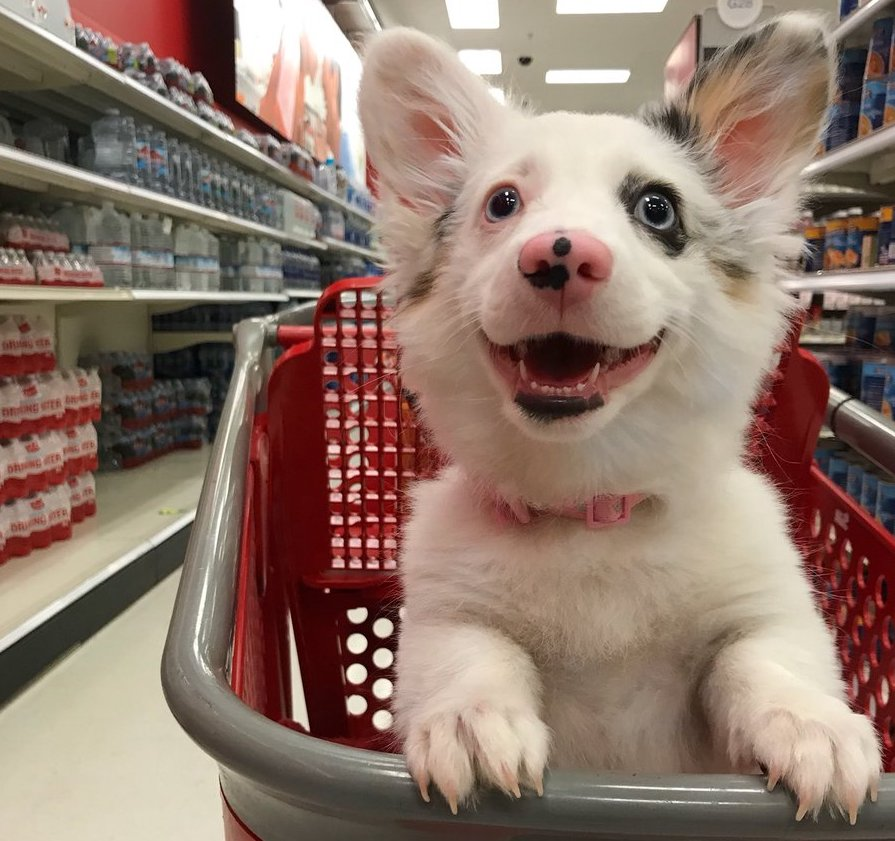 Look At This Adorable Puppy Living Its Best Life At Target
