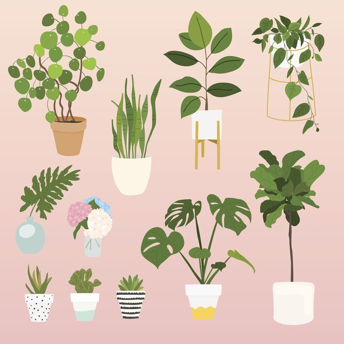 12 Of The Best Plants For Apartments, The Best Indoor Plants ...