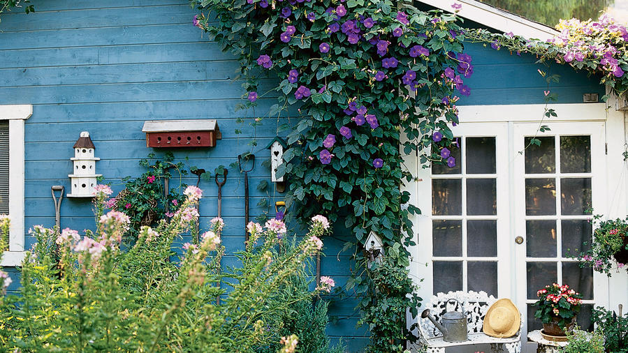 How To Use Morning Glory Vines Sunset Magazine