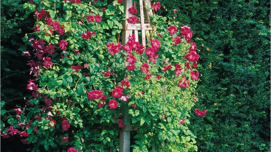 Build a Garden Obelisk - Sunset Magazine on hvac house plans, hampton house plans, garden house plans,