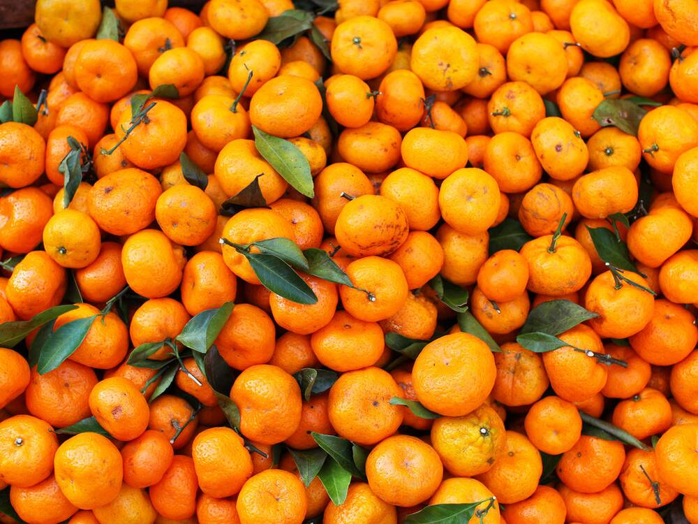 satsumas are worth seeking out here s why cooking light