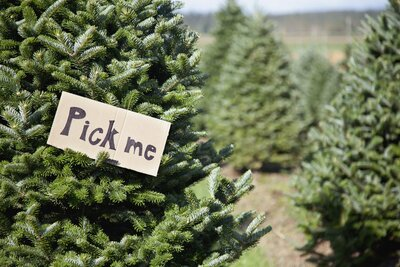 12 Types of Christmas Trees to Know Before Heading to the Farm ...
