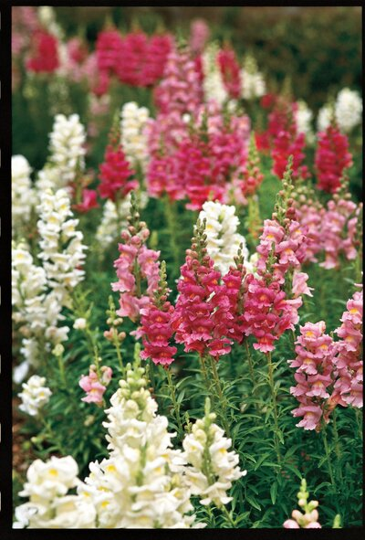 February Around Your Garden Texas Edition Southern Living