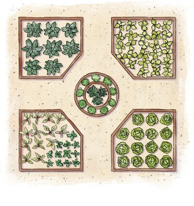 how to grow your own vegetable garden southern living