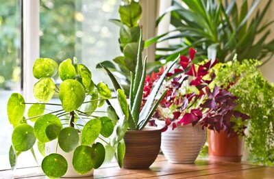 Heres Why You Should Use The Ice Cube Method With Your Houseplants
