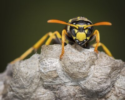 why yellow jackets are such jerks right now southern living