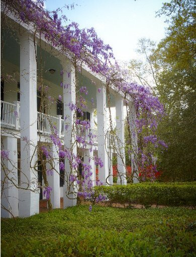 Five Monster Vines You Must Never Plant Southern Living