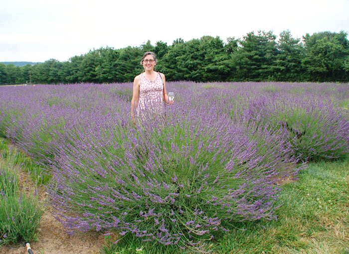 A REAL Lavender for the South! Sweet! - Southern Living