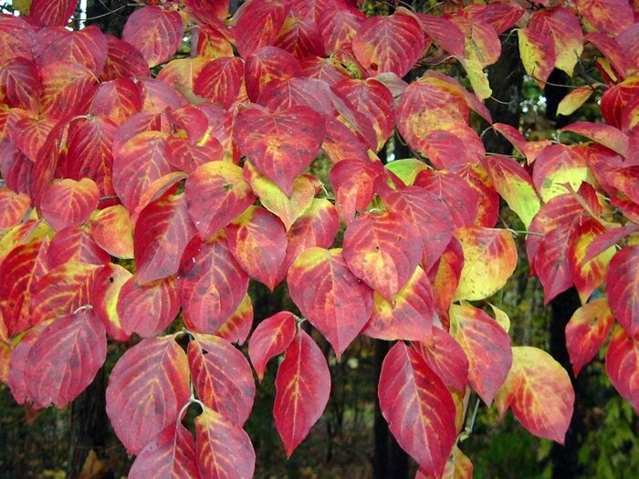 Whats Wrong With My Dogwood Southern Living