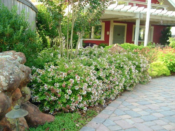 5 nice shrubs for summer blooms southern living