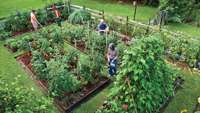 Plant Vegetable In Your Back Yard