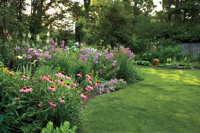 12 great perennials for your garden southern living max frei soapwort mightylinksfo