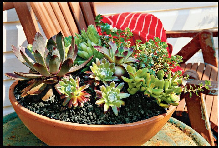 How to plant succulents in containers southern living planting succulents workwithnaturefo
