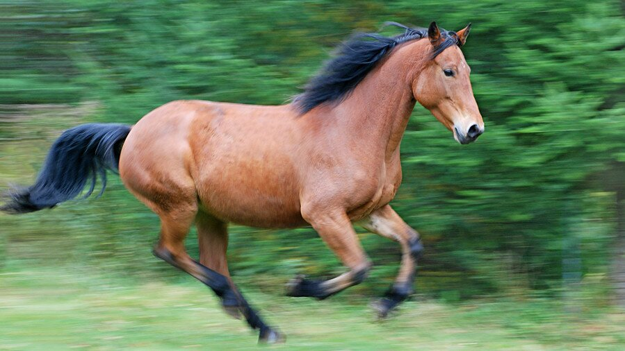 our favorite horse names southern living