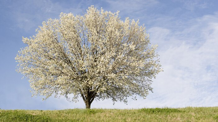 12 trees that will ruin your yard southern living