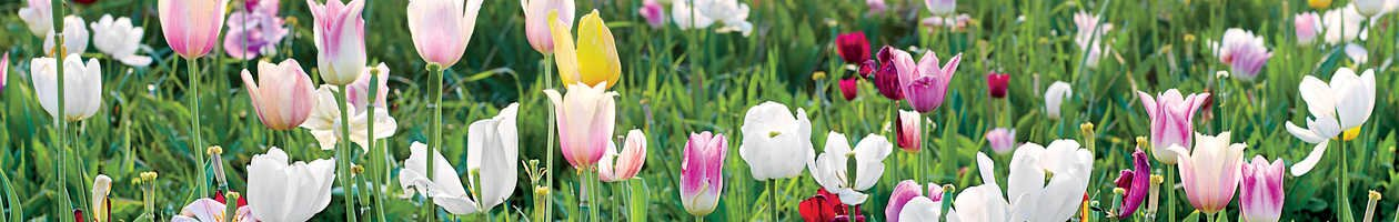 Gardening Ideas & Tips - Southern Living