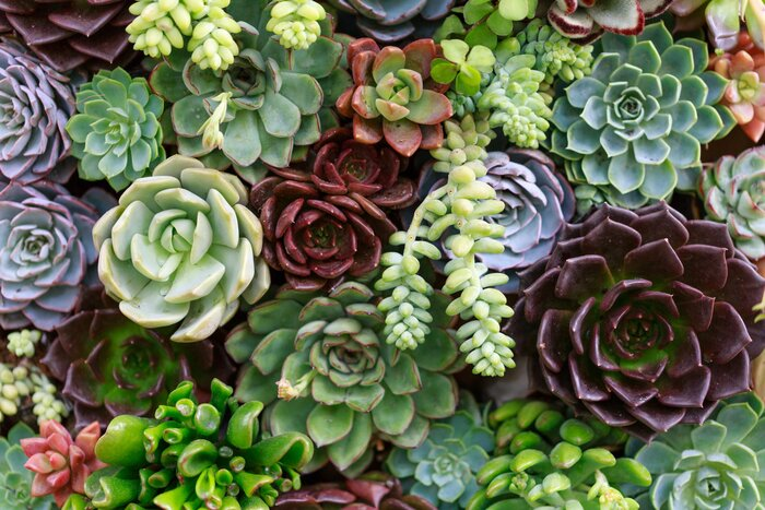 One Thing I Wish Someone Told Me Before Started A Succulent Garden