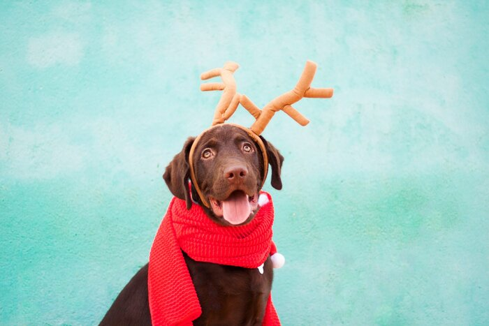 How to send the best christmas card of your dog southern living pet christmas card tips m4hsunfo
