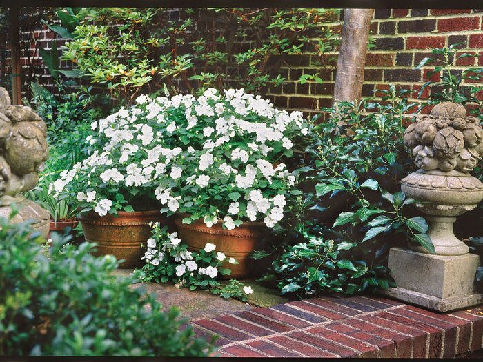 Using White To Lighten Your Garden Is A Great Way Let The Tone Of Plants Themselves Be Neutral Foundation For Design You Build Upon
