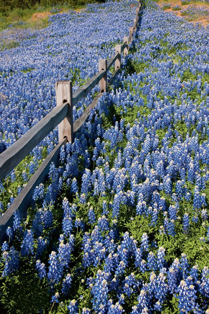 Texas hill country road trip southern living travel the texas hill country mightylinksfo