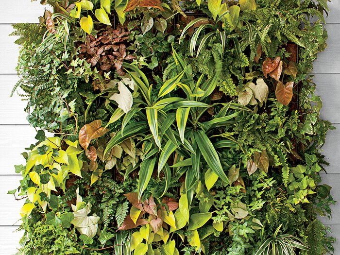 How To Plant a Living Vertical Wall Garden - Southern Living
