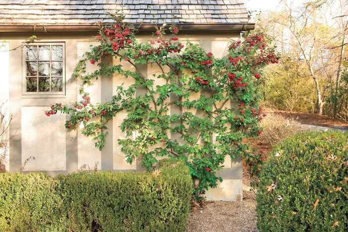 Flat Out Beautiful Espalier Southern Living