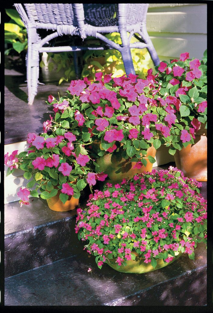 Effortless annuals easy to grow annual flowers southern living the abcs of annuals mightylinksfo
