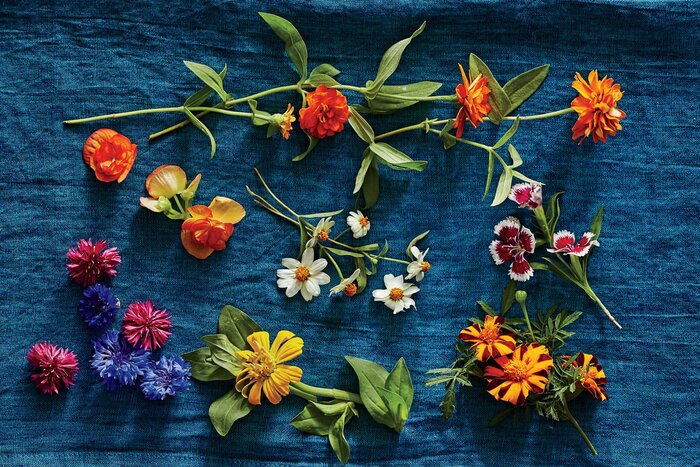 5 edible flowers to know about this spring southern living edible flowers mightylinksfo