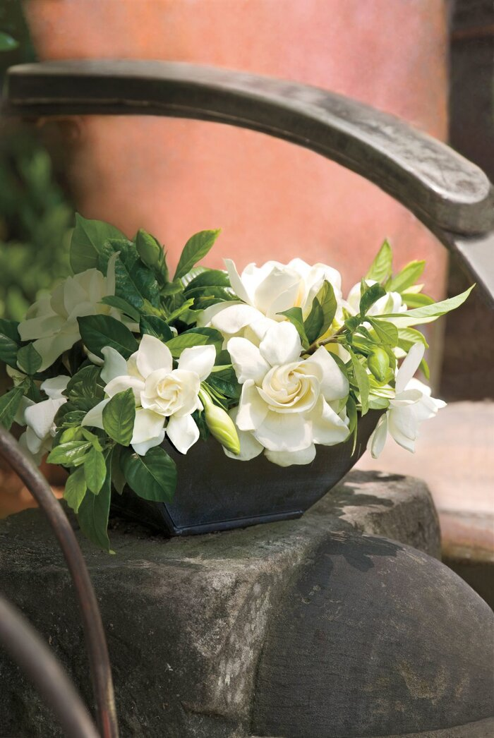 Go ahead plant those gardenias southern living gardenia bowl mightylinksfo