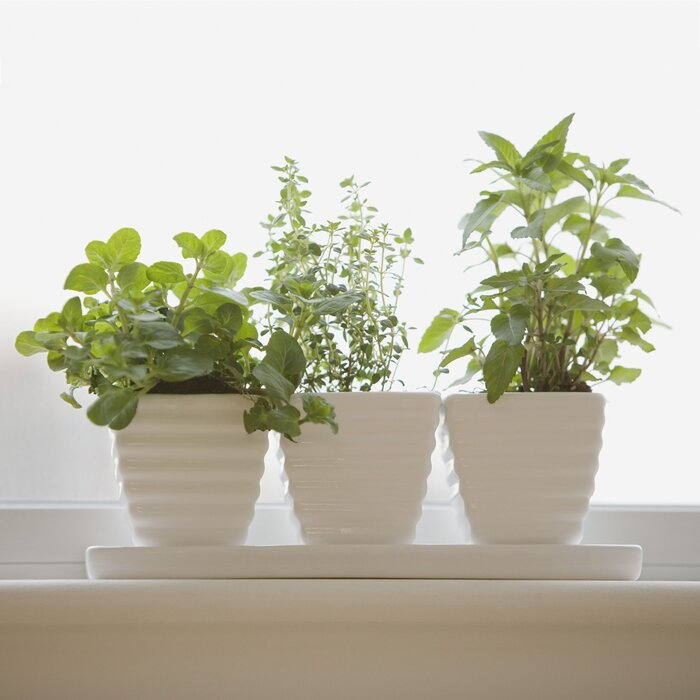 Indoor Herb Garden Winter How to plant an indoor winter herb garden southern living herb garden workwithnaturefo