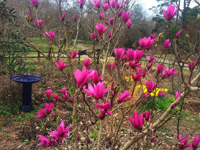 What you need to know about the jane magnolia southern living jane magnolia mightylinksfo