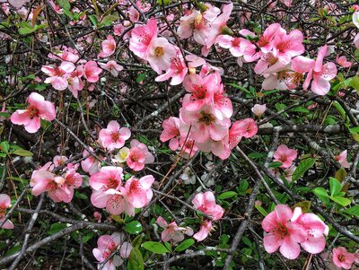 Shrubs & Bushes - Flowering, Fast Growing & More - Southern Living